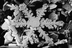 800px-Snowflake_magnified_usda
